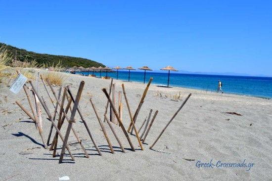 Βαθύ λακωνία παραλία χελώνα καρέτα-καρέτα