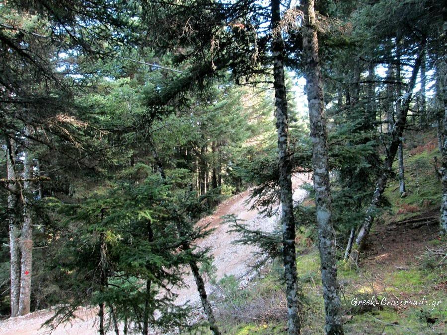 Ναυπακτία Λάλικα δασικός δρόμος