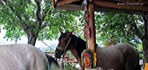 Ναυπακτία φάρμα Μίχου άλογα
