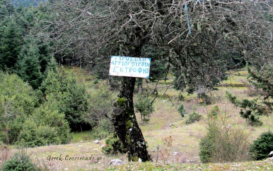 Ναυπακτία Λάλικα αγριογούρουνα ελευθέρας βοσκής ταμπέλα