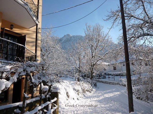 Ελάτη Θεσσαλία