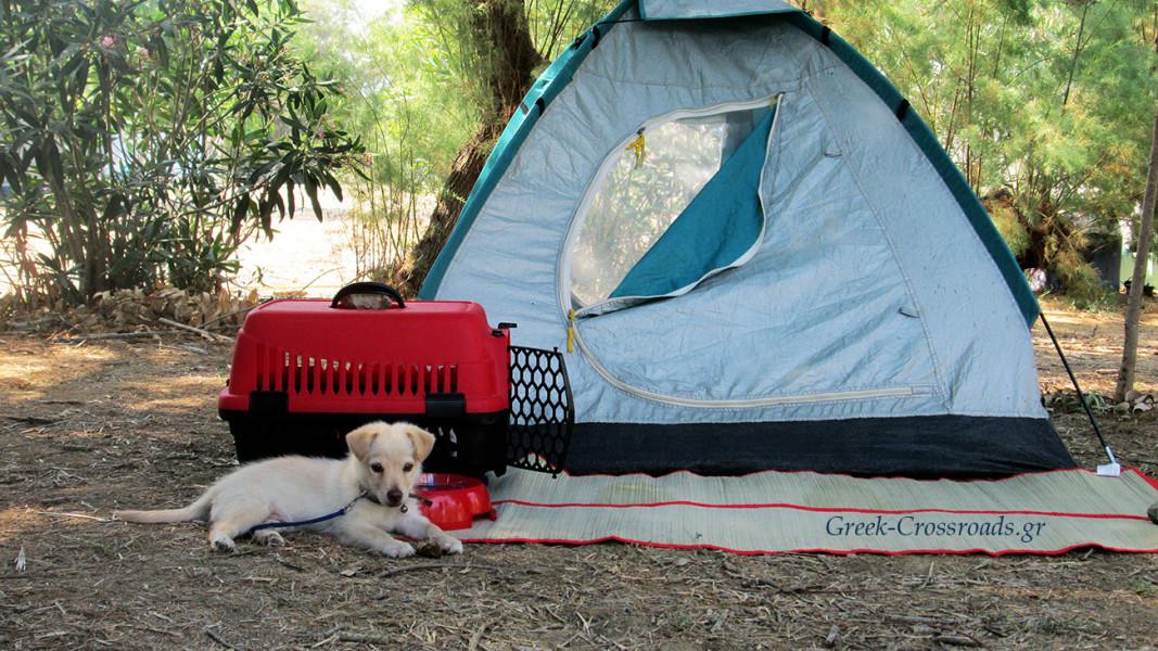 σκύλος camping