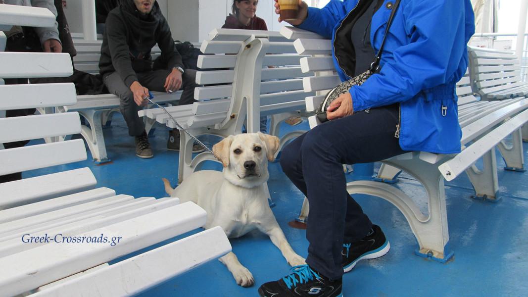 σκύλος ταξίδι με πλοίο