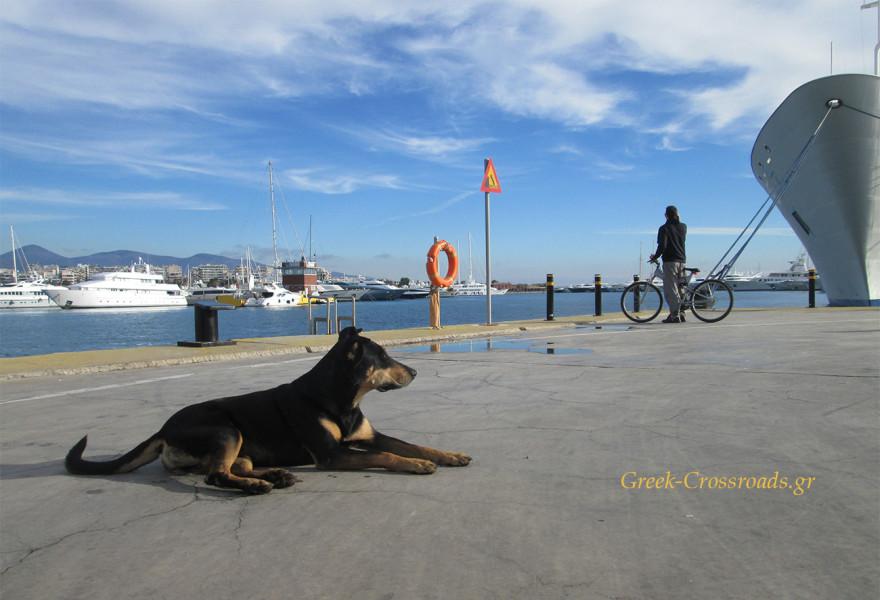 σκύλος λιμάνι