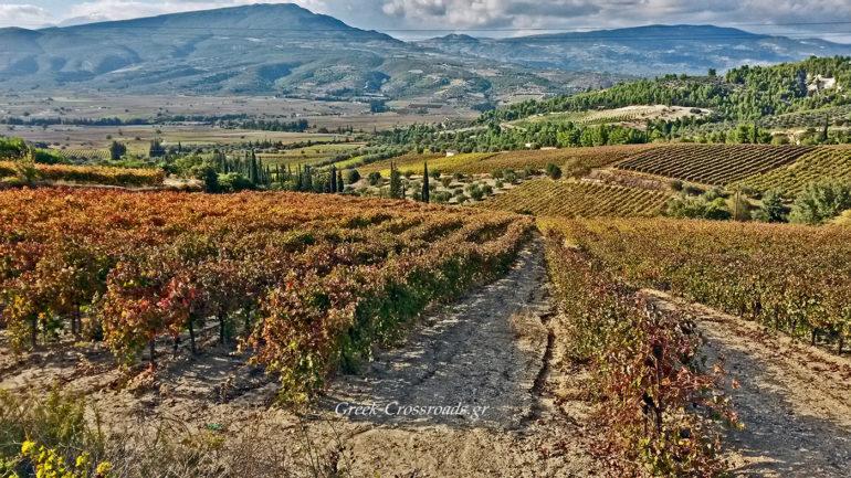 Νεμέα αμπελώνες φθινόπωρο Δρόμοι κρασιού
