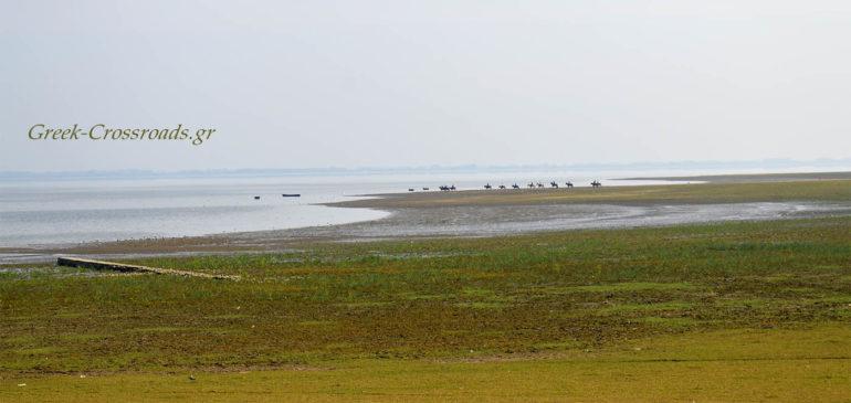 λίμνη Κερκίνη ιππασία