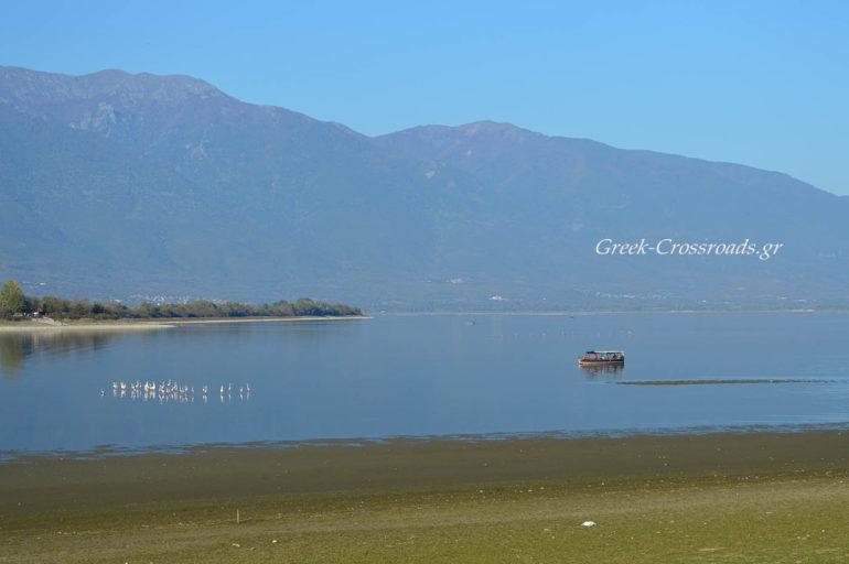 Λίιμνη Κερκίνη φλαμίνγκο βαρκάδα